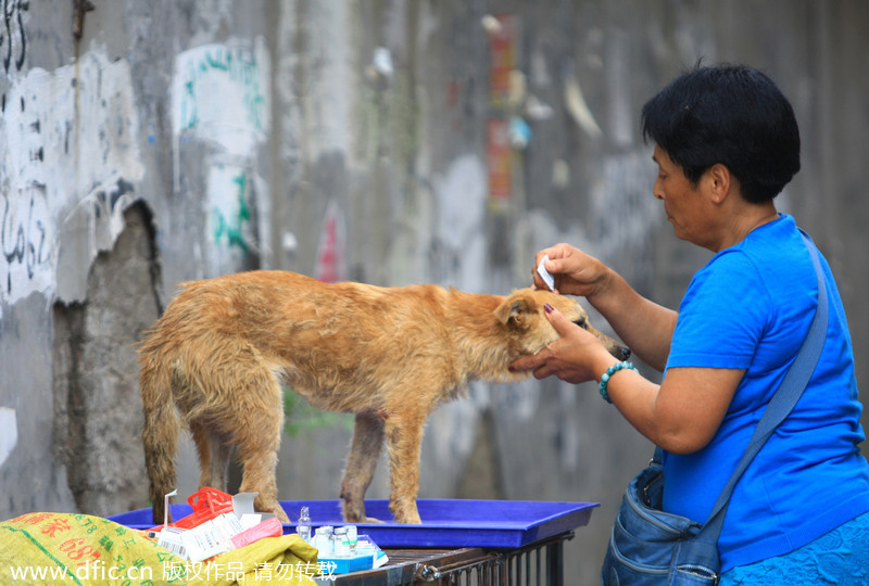 Activist Purchases Dogs Before Dog Eating Festival In