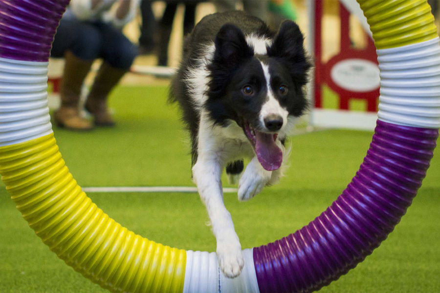138th Westminster Kennel Club Dog Show to open