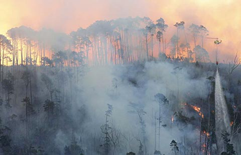 Cape Town ravaged by bushfire