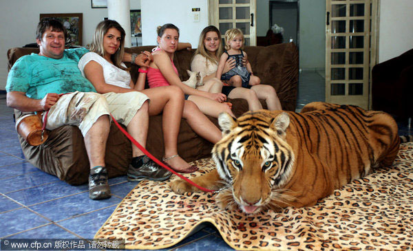 Big cats are part of the family[5]|chinadaily.com.cn